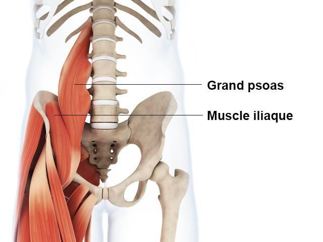 Psoas iliaque - Anatomie