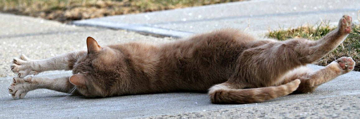 Stretching – Chat