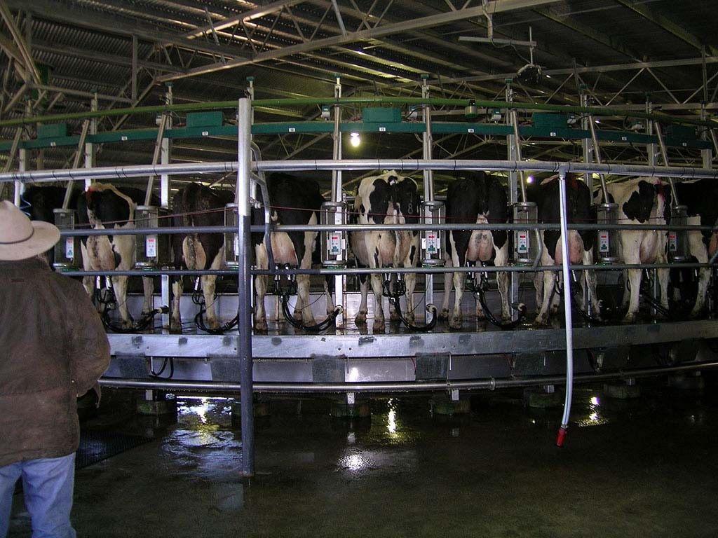 Industrie du lait