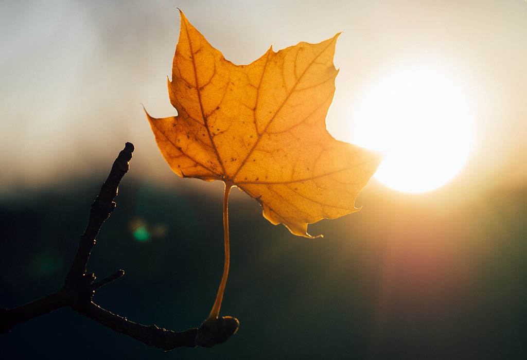 Une feuille exposée au soleil