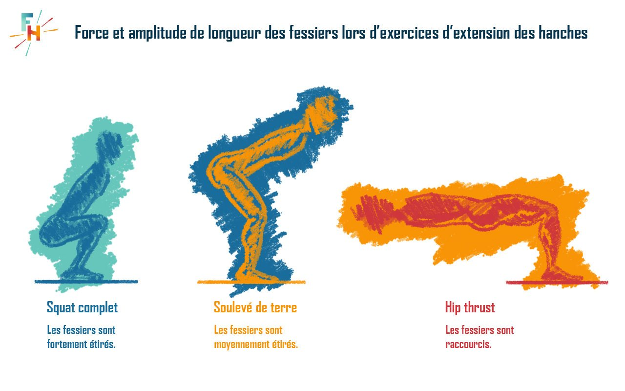 Contraction maximale des fessiers dans 3 positions
