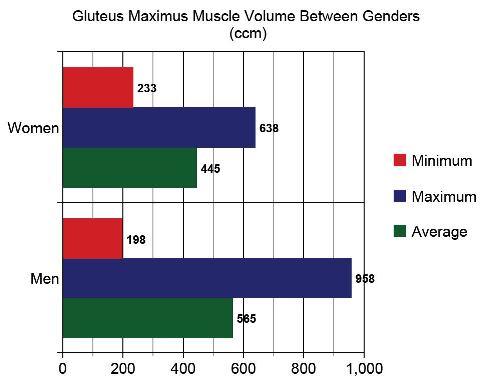 Le volume des fessiers varie également en fonction du genre