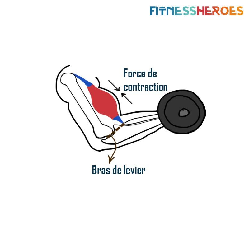 bras-de-levier-articulation