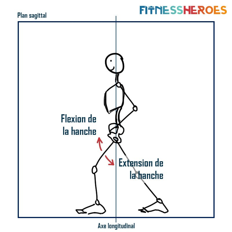 extension-hanche-plan-sagittal