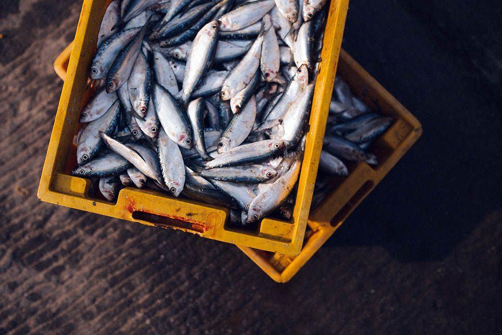 Une pêche de poissons - Le plein d'omégas 3