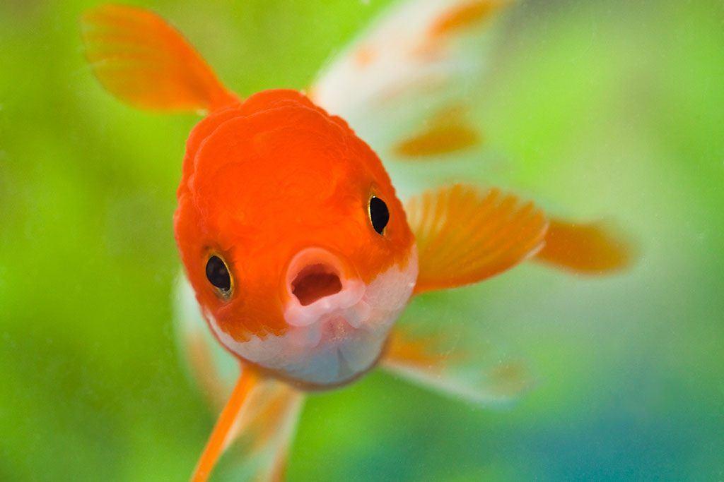 Un poisson - Une source d'omegas 3 reconnue
